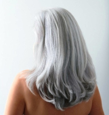 gray-hair-bear296